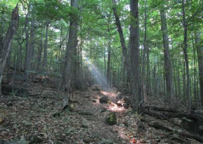 Une lumière dans le bois
