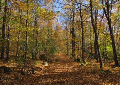 Sentier du silence durant l'automne