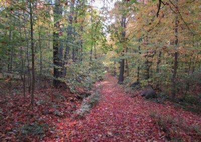 Sentier du silence au coeur de l'automne