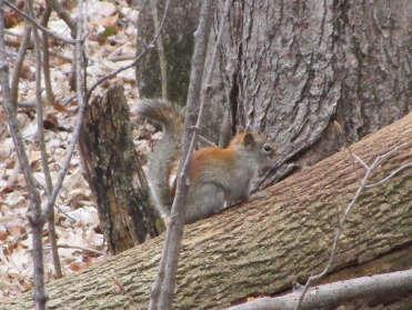 Un écureuil..